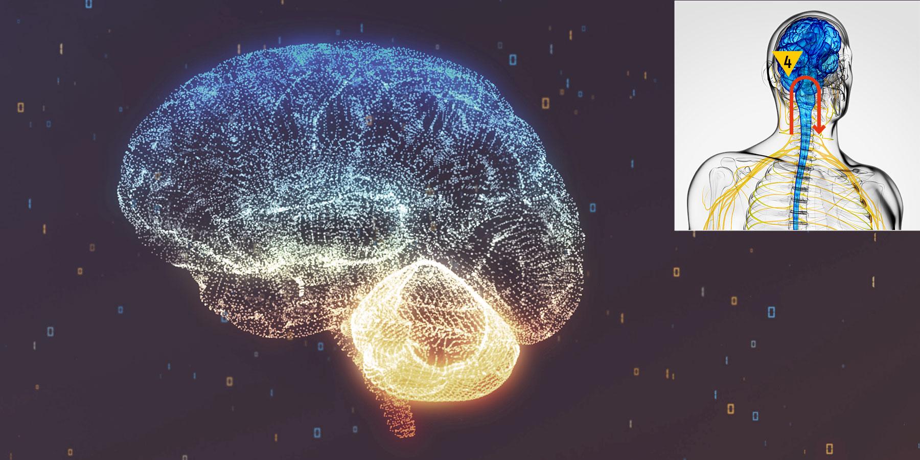 Vibra fase 4 - Centri sovra segmentari ed integrazione corticale senso-motoria
